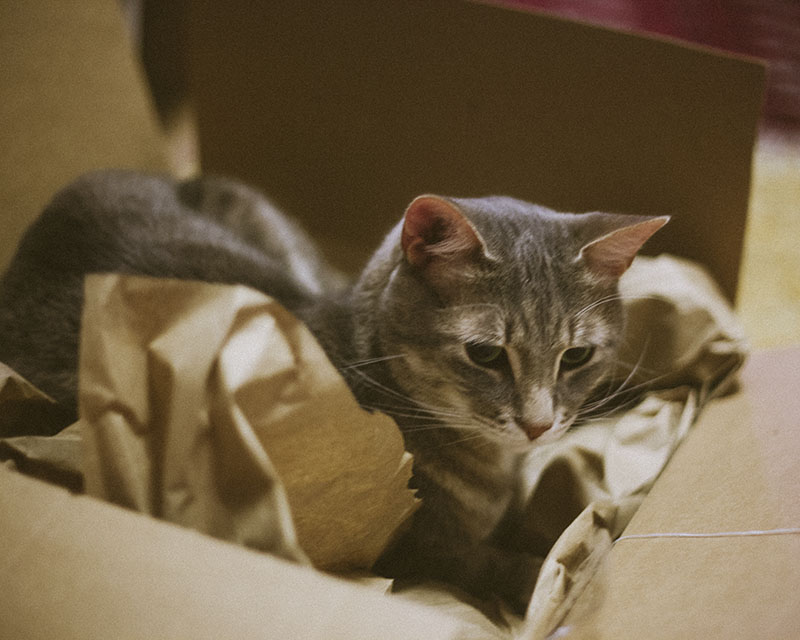 cute-kitty-in-cardboard-box
