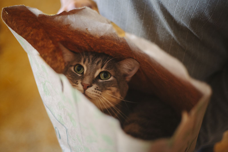 adorable-kitty-cat-in-paper-bag